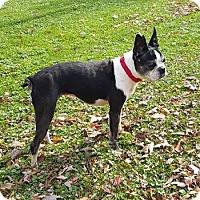 Adopt A Pet :: Lilly - Lisbon, OH