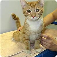 Adopt A Pet :: Leo - Indiana, PA