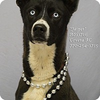Adopt A Pet :: Jasper - Newnan City, GA