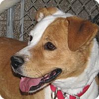 Adopt A Pet :: Thor - Ruidoso, NM