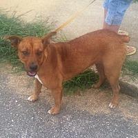 Adopt A Pet :: Jackie - Hayden, AL