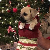 Adopt A Pet :: Maggie - Tomah, WI