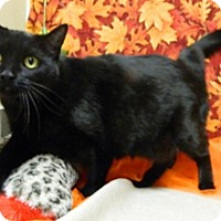 Adopt A Pet :: Janet - Columbus, NE