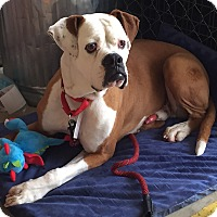 Adopt A Pet :: Rogan - Agoura, CA