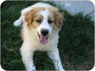 Mark Twain S Dog Breed