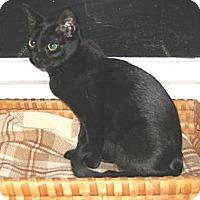 Adopt A Pet :: PAULA - 2014 - Hamilton, NJ
