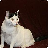 Adopt A Pet :: ARMANI - SILVER SPRING, MD