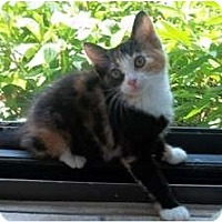 Adopt A Pet :: Lexi Lue - Acme, PA
