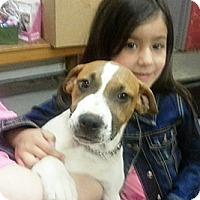 Adopt A Pet :: Fergue - Philadelphia, PA