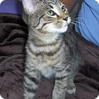 Adopt A Pet :: Leo - Richmond, VA