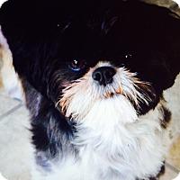 Adopt A Pet :: Miya (Courtesy Listing) - Cedar Rapids, IA