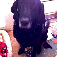Adopt A Pet :: Oscar - Petaluma, CA