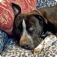 Adopt A Pet :: Bootstrap - Warner Robins, GA