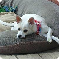 Adopt A Pet :: Pixi Stix - Eastpointe, MI