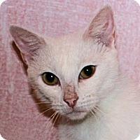 Adopt A Pet :: Tami - Morganton, NC