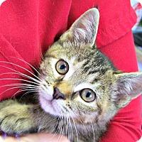 Adopt A Pet :: Dorothea - Toledo, OH