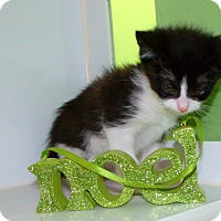 Adopt A Pet :: charles - Muskegon, MI