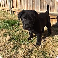 Adopt A Pet :: Ross - Bedford, TX
