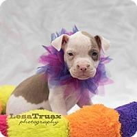 Adopt A Pet :: Athena - Frisco, TX
