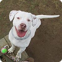 Adopt A Pet :: Ozzy-Prison Dog - Elyria, OH