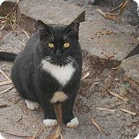 Adopt A Pet :: Mr Harris - Naples, FL