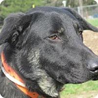Adopt A Pet :: Siren - Baltimore, MD