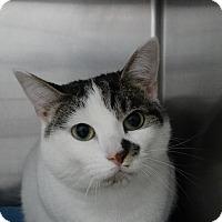 Adopt A Pet :: Smudge - Elyria, OH