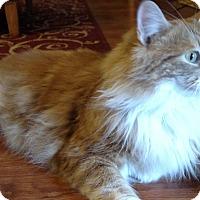 Adopt A Pet :: Archie - Orange, CA