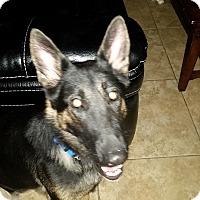 Adopt A Pet :: Cambria - Las Vegas, NV