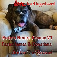Adopt A Pet :: FOSTER VOLUNTEERS NEEDED - Whiteville, NC