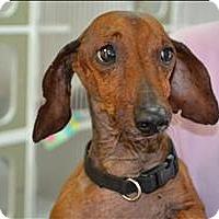 Adopt A Pet :: Liam - Paris, KY