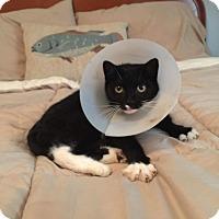 Adopt A Pet :: Sassy - Huntington, WV