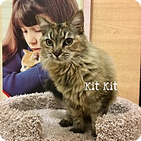 Adopt A Pet :: Kit Kit - Foothill Ranch, CA