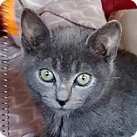 Adopt A Pet :: Harper - Palmdale, CA