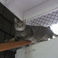 Adopt A Pet :: Chambray - Kingston, WA