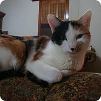Adopt A Pet :: Praline - Rochester, MN
