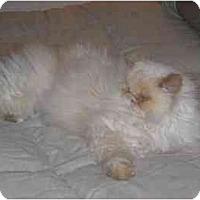 Adopt A Pet :: Sophie - Davis, CA