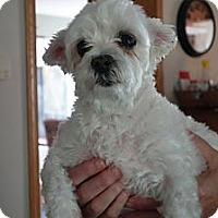 Adopt A Pet :: Sparkles - Long Beach, NY