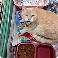 Adopt A Pet :: Thomas - Walnut, IA