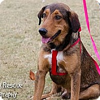 Adopt A Pet :: Henry - Arlington, TN