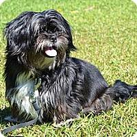 Adopt A Pet :: *Matilda - PENDING - Westport, CT