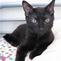 Adopt A Pet :: Athos - Davis, CA