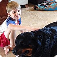 Adopt A Pet :: Natalie - Gilbert, AZ