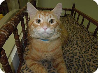 Cats For Adoption In Medina Ohio
