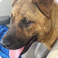 Adopt A Pet :: Tessa - Mira Loma, CA