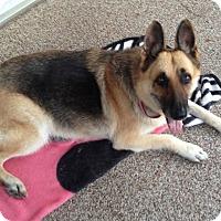 Adopt A Pet :: Missy - Kingwood, TX
