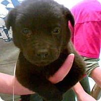 Adopt A Pet :: A266105 - Conroe, TX