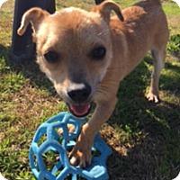 Adopt A Pet :: Omar - Patterson, CA