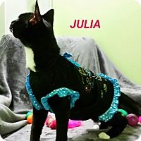 Adopt A Pet :: julia - Muskegon, MI