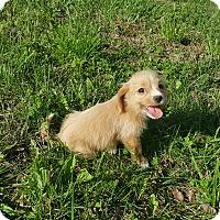 Adopt A Pet :: Bimbette~adopted! - Glastonbury, CT